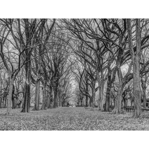 Rows of trees in Central park, New York