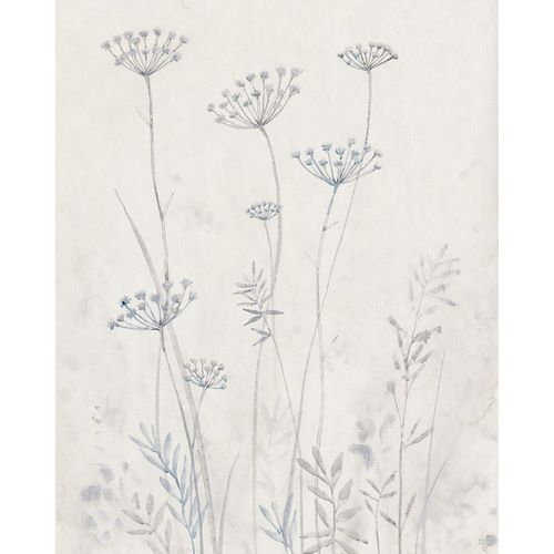 Neutral Queen Annes Lace II