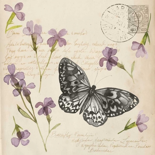 Pressed Flower Collection A