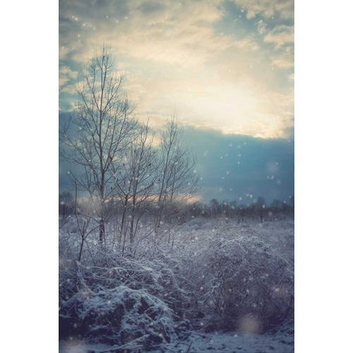 A Winters Day
